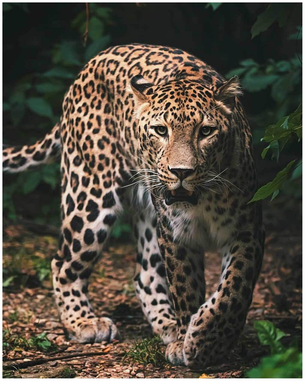 Mikroflanelová dětská deka Leopard green 120x150 cm