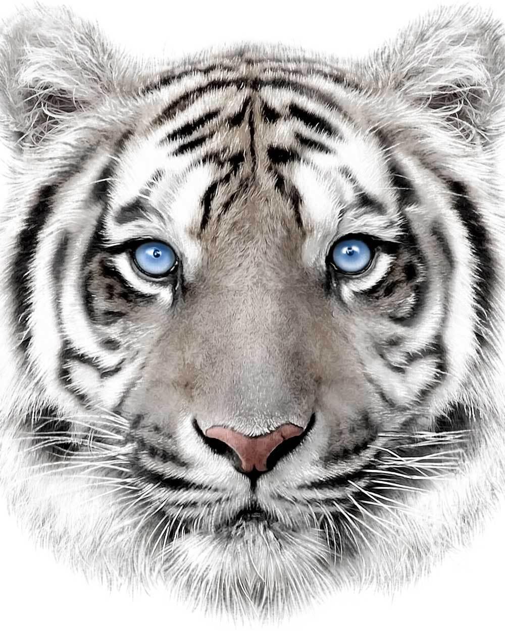 Mikroflanelová dětská deka Bílý tygr 120x150 cm