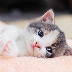Povlak na polštářek Kitten 40x40 cm
