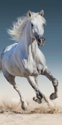 Osuška Kůň 03 70x140 cm